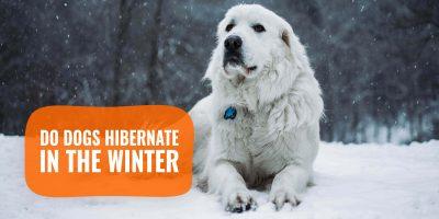 do dogs hibernate in the winter