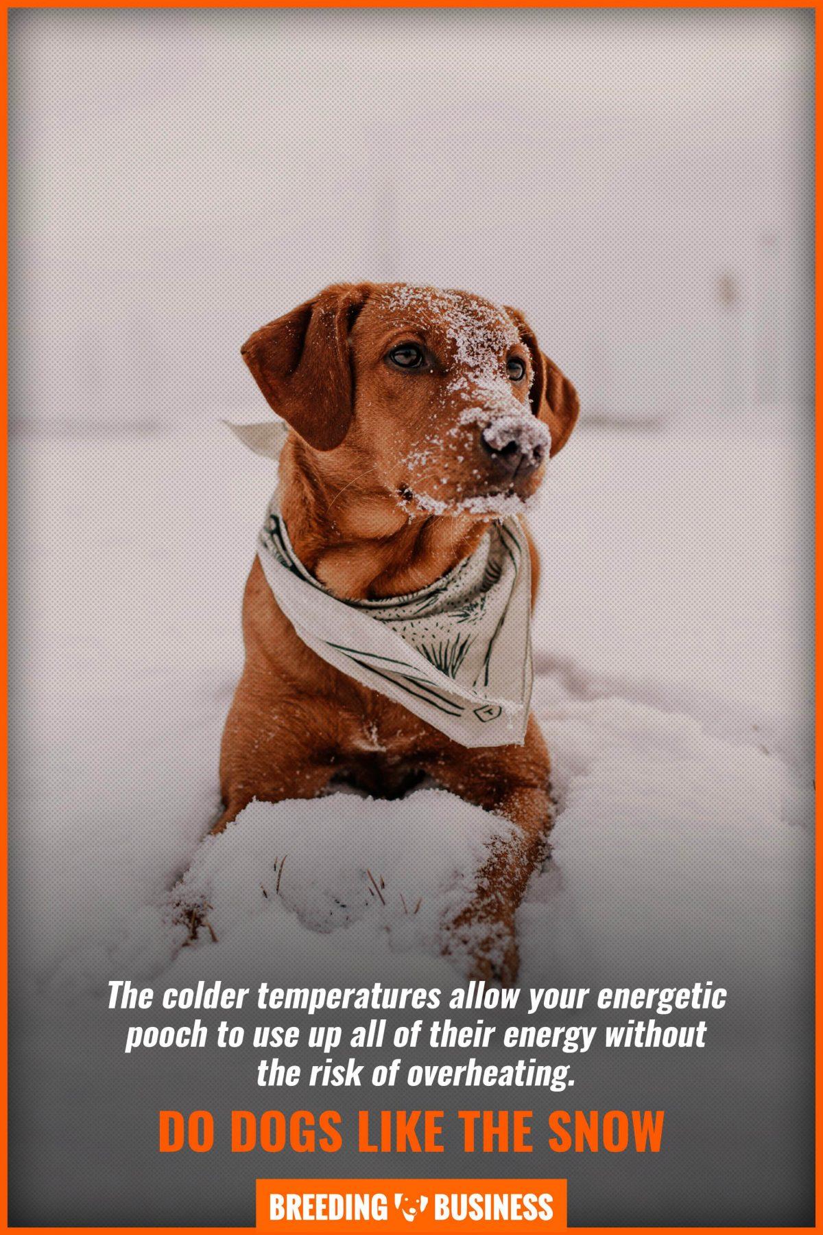 do dogs like the snow