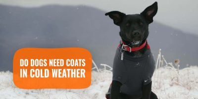 do dogs need coats in cold weather