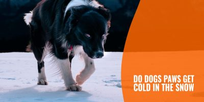 do dogs paws get cold in the snow