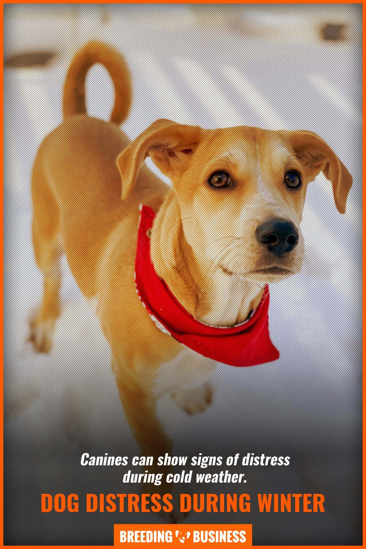dog distress during winter