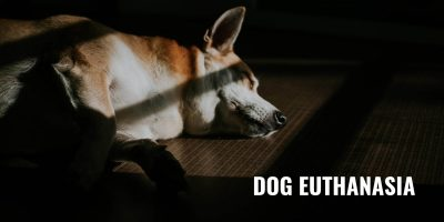 dog euthanasia
