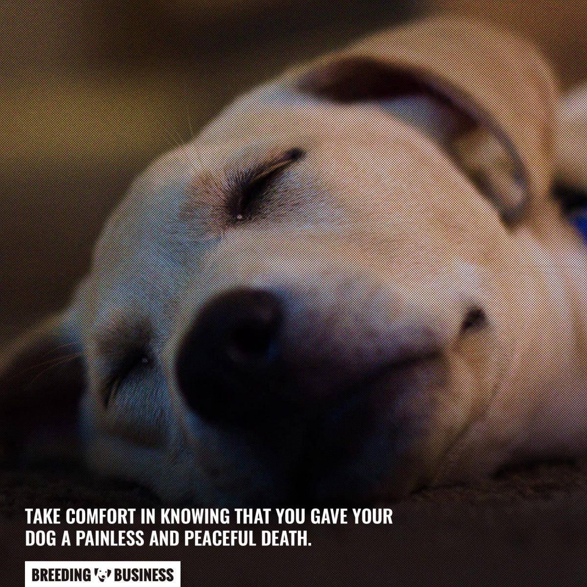 dog euthanasia painless