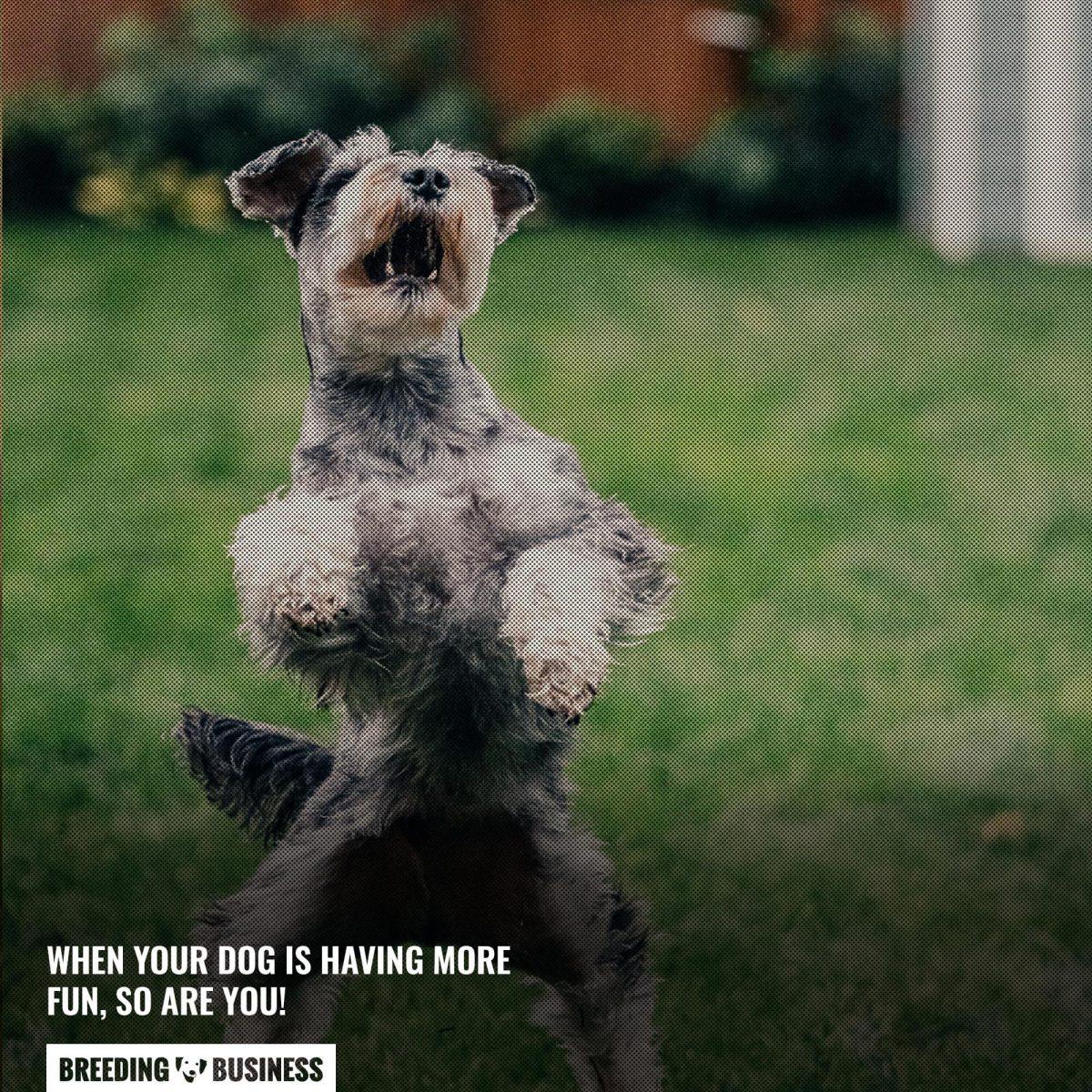 dog fun training