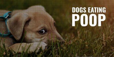 dogs eating poop