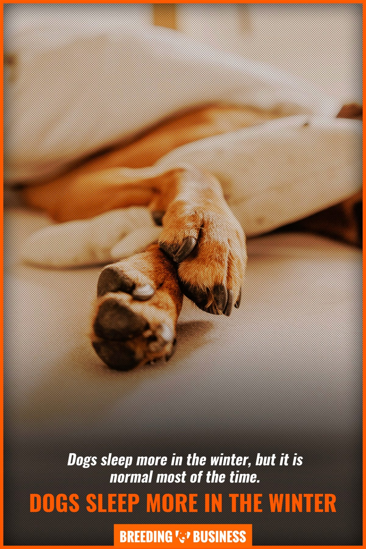 dogs sleep more in the winter