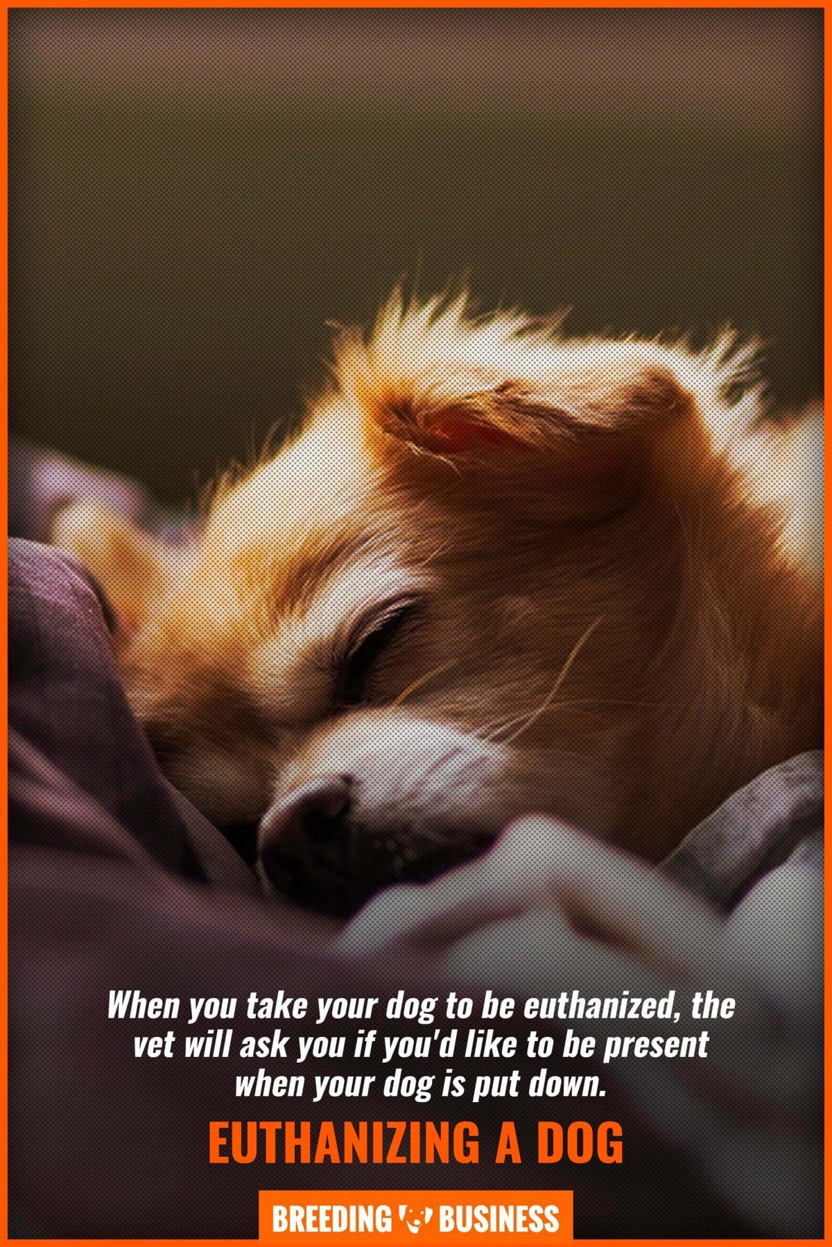 euthanizing a dog