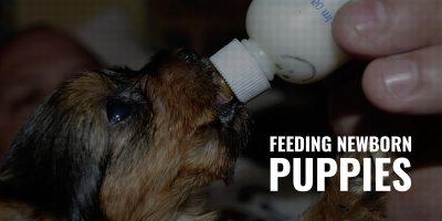 feeding newborn puppies