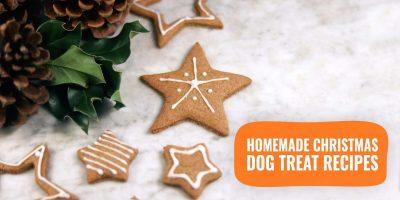 homemade christmas dog treat recipes