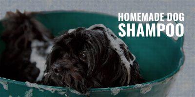 Homemade Dog Shampoo – Key DIY Ingredients, Mixing, Tips & FAQ