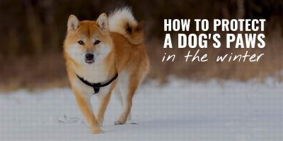 how to protect a dogs paws in the winter