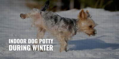 indoor dog potty during winter