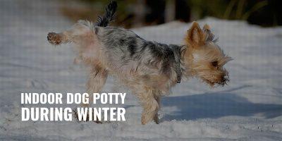 indoor dog potty during winter