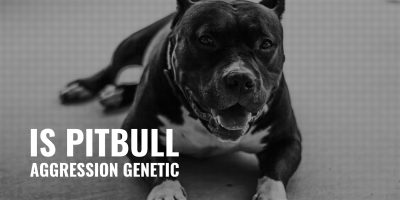 is pitbull aggression genetic