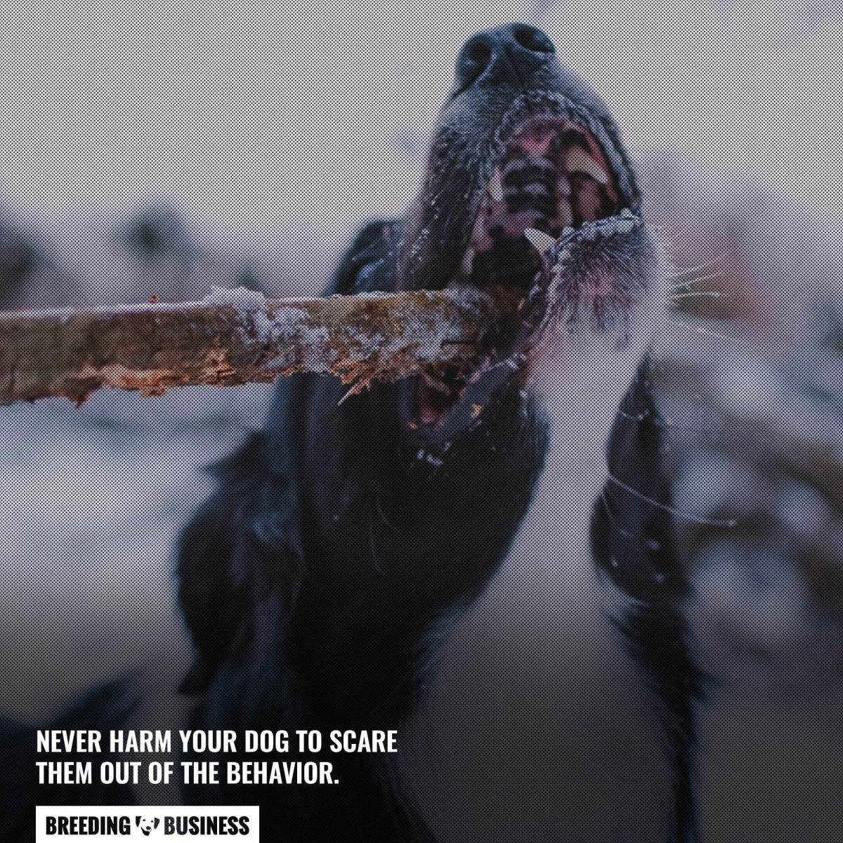 never harm your dog out of behavior
