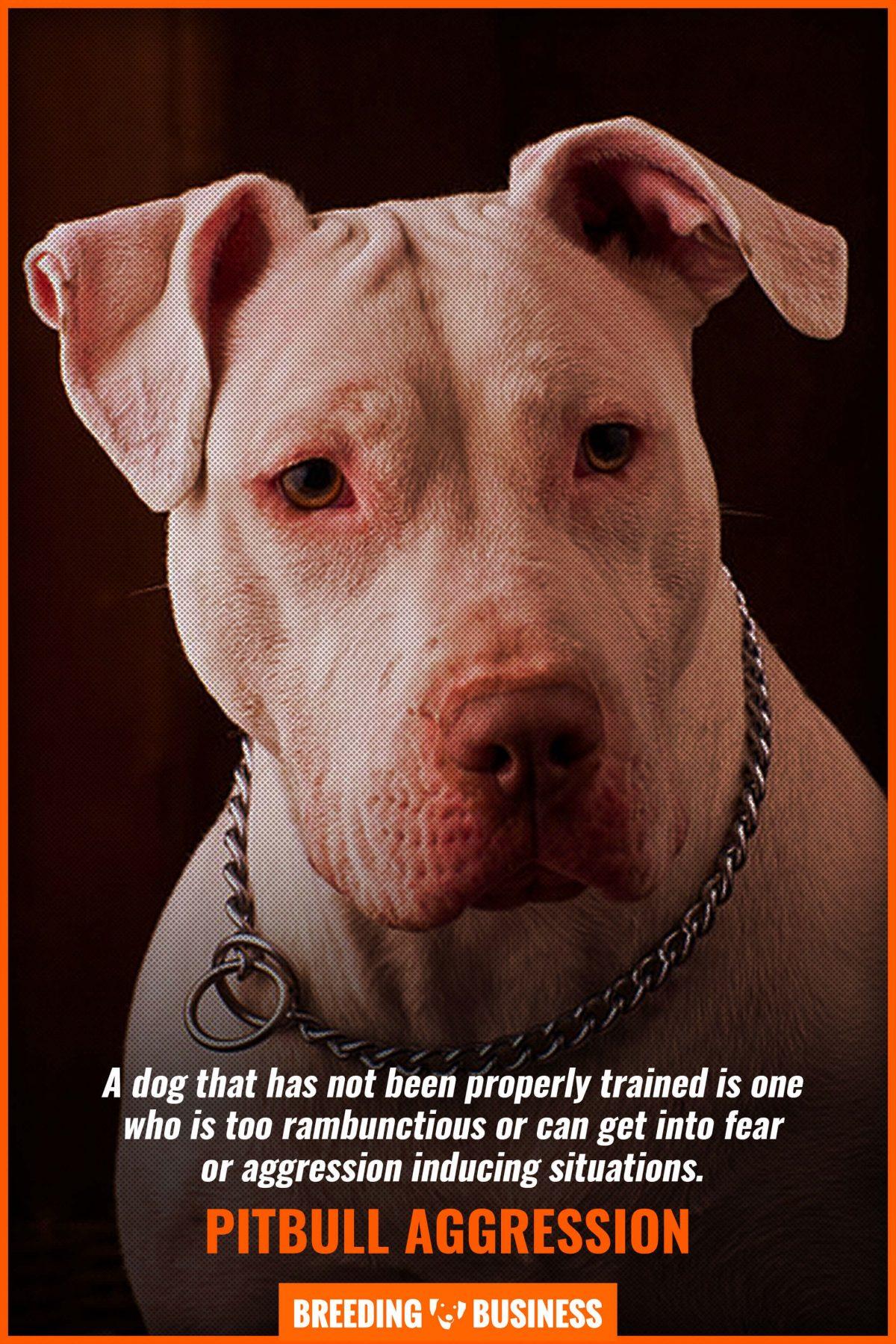 pitbull  aggression