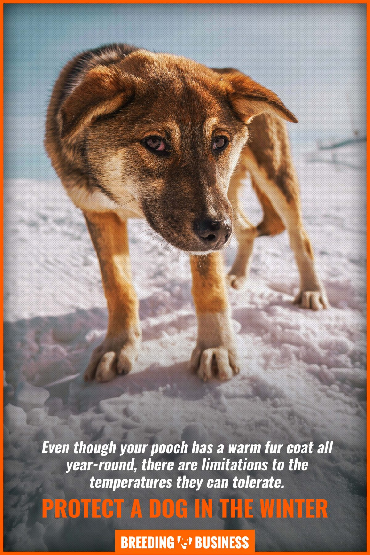 protect a dog in the winter