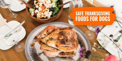 safe thanksgiving foods for dogs