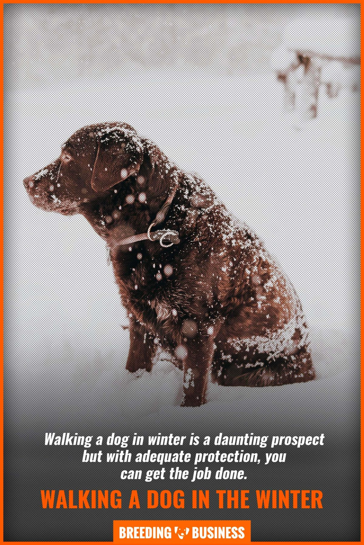 walking a dog in the winter