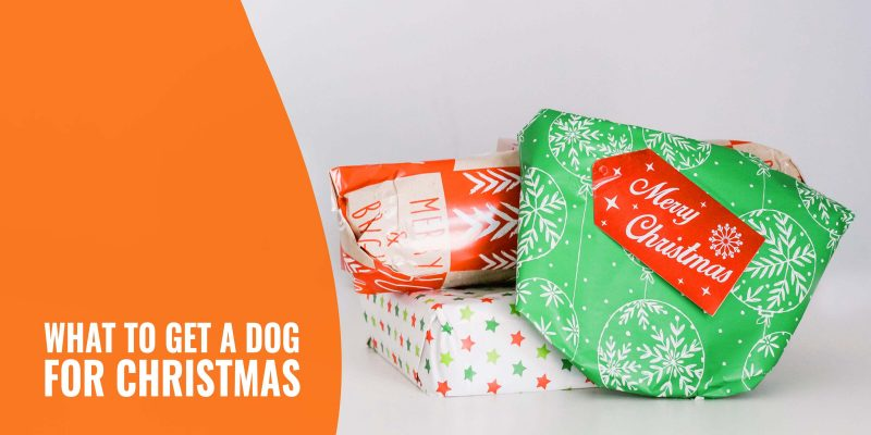 what to get a dog for christmas