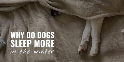 why do dogs sleep more in the winter