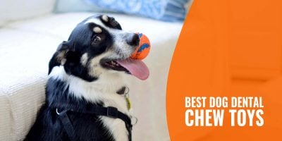 best dog dental chew toys