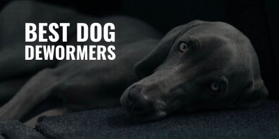 10 Best Dog Dewormers – Liquid And Tablets