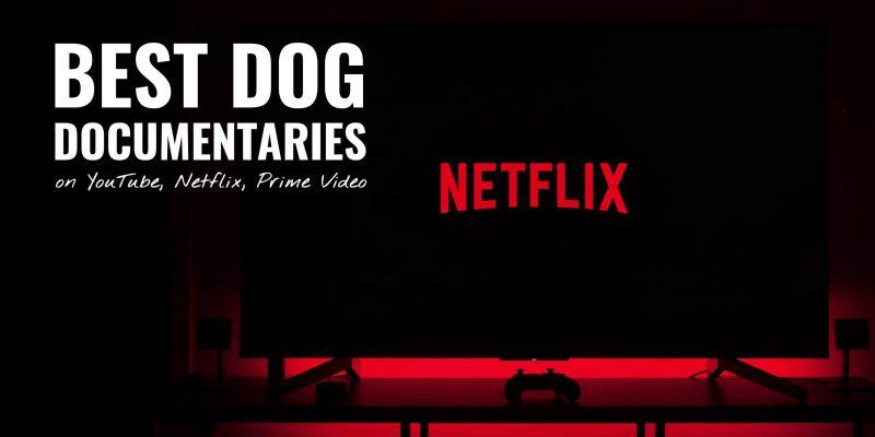 20 Best Dog Documentaries on YouTube, Netflix, Prime Video
