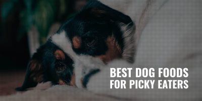 15 Best Dog Foods For Picky Eaters – Top Palatability, Flavors & Taste