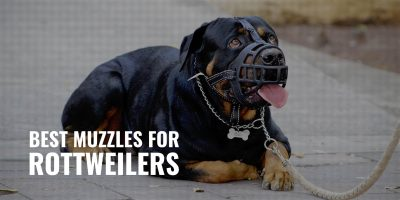 best muzzles for rottweilers