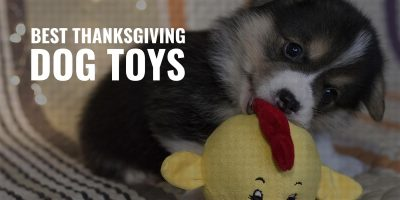 best thanksgiving dog toys