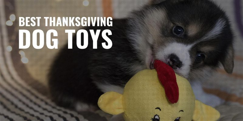 best thanksgiving dog toys
