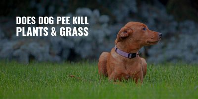 does dog pee kill plants and grass