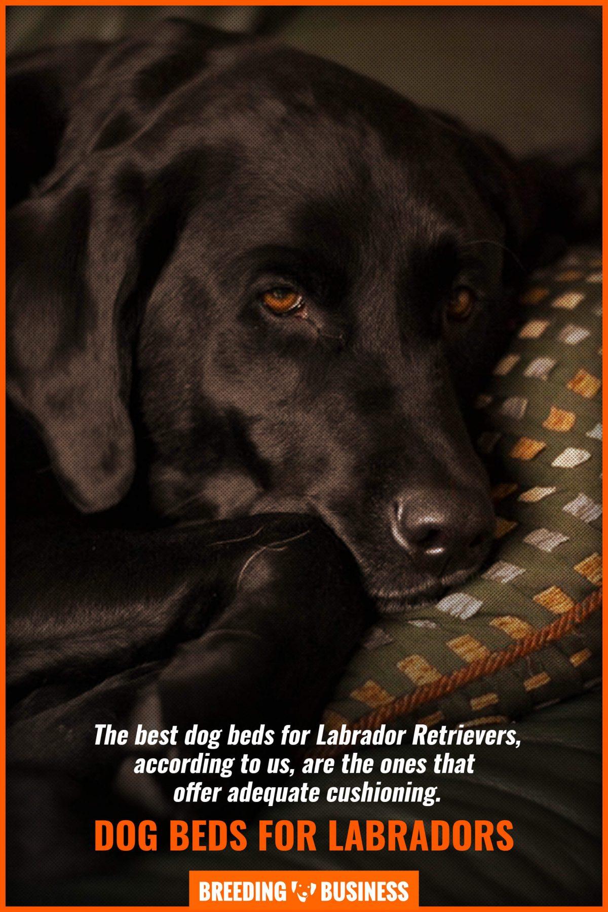 dog beds for labradors