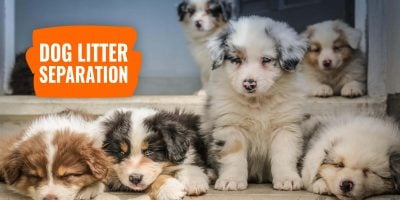 dog litter separation