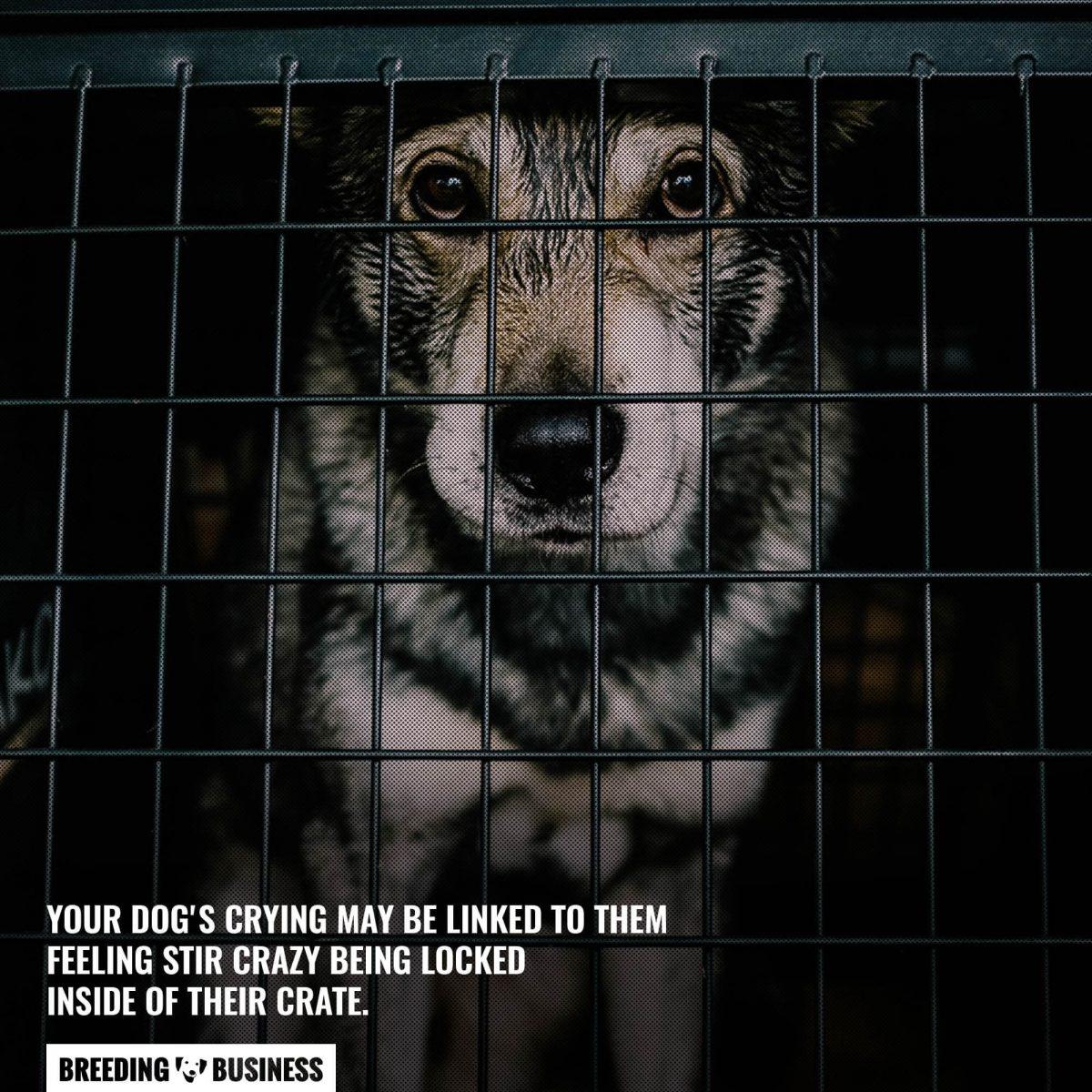 dog stir crazy in crate