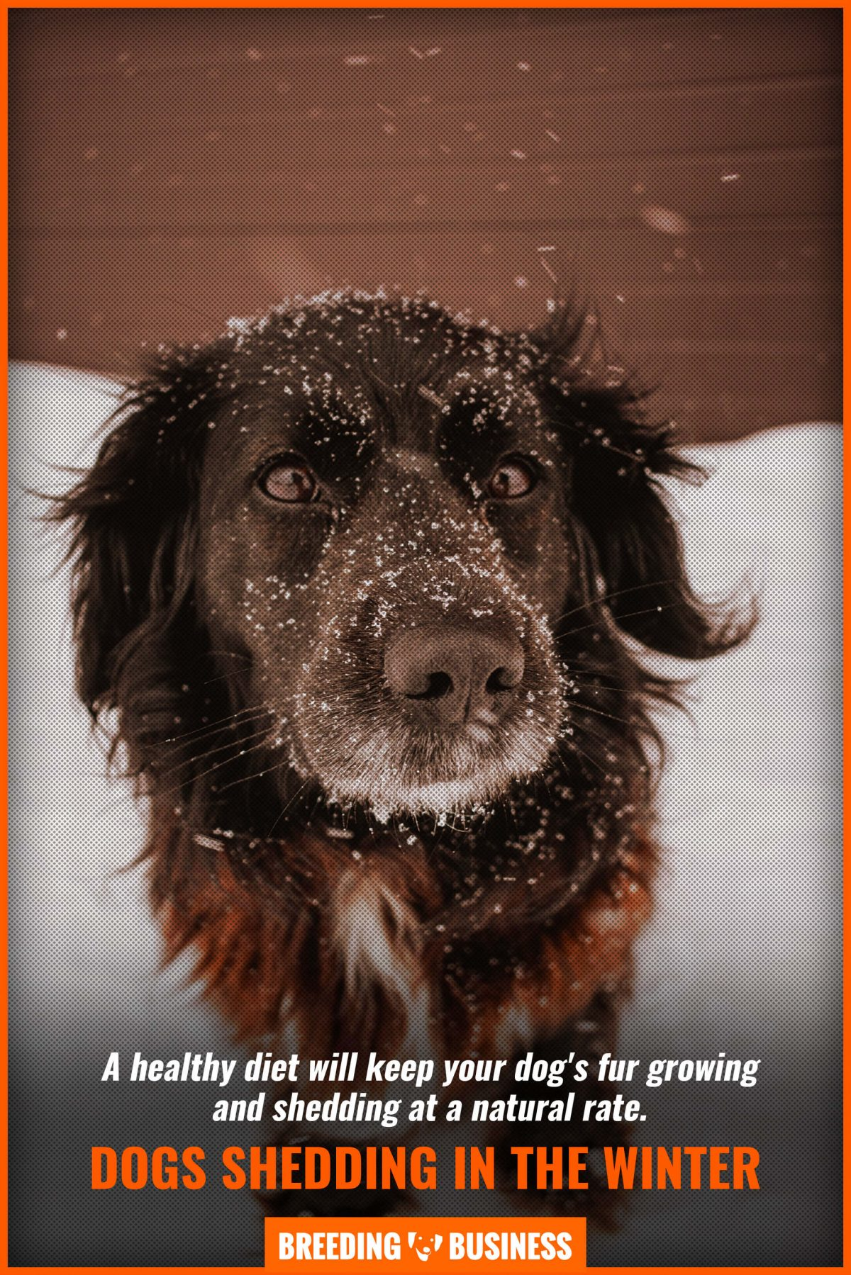 dogs shedding in the winter