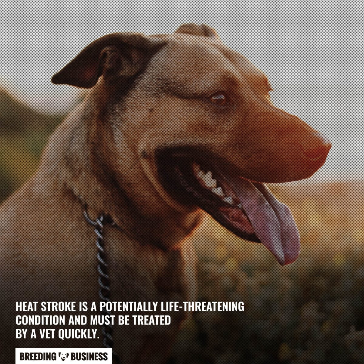 heat stroke is life threatening