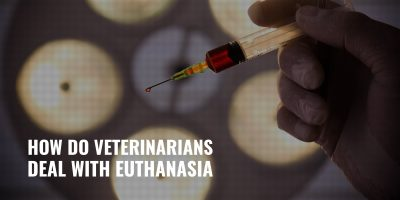 How Do Veterinarians Deal with Euthanasia