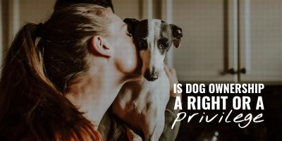 is dog ownership a right or a privilege