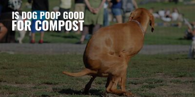 is dog poop good for compost