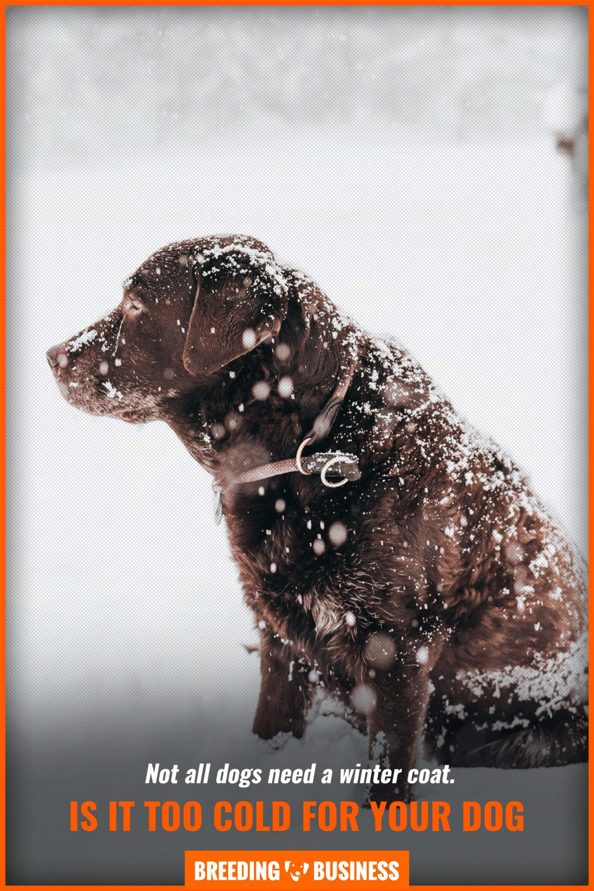 is it too cold for your dog