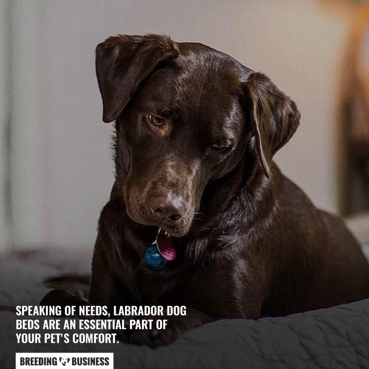 labrador dog beds are essential