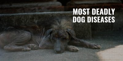 most deadly dog diseases