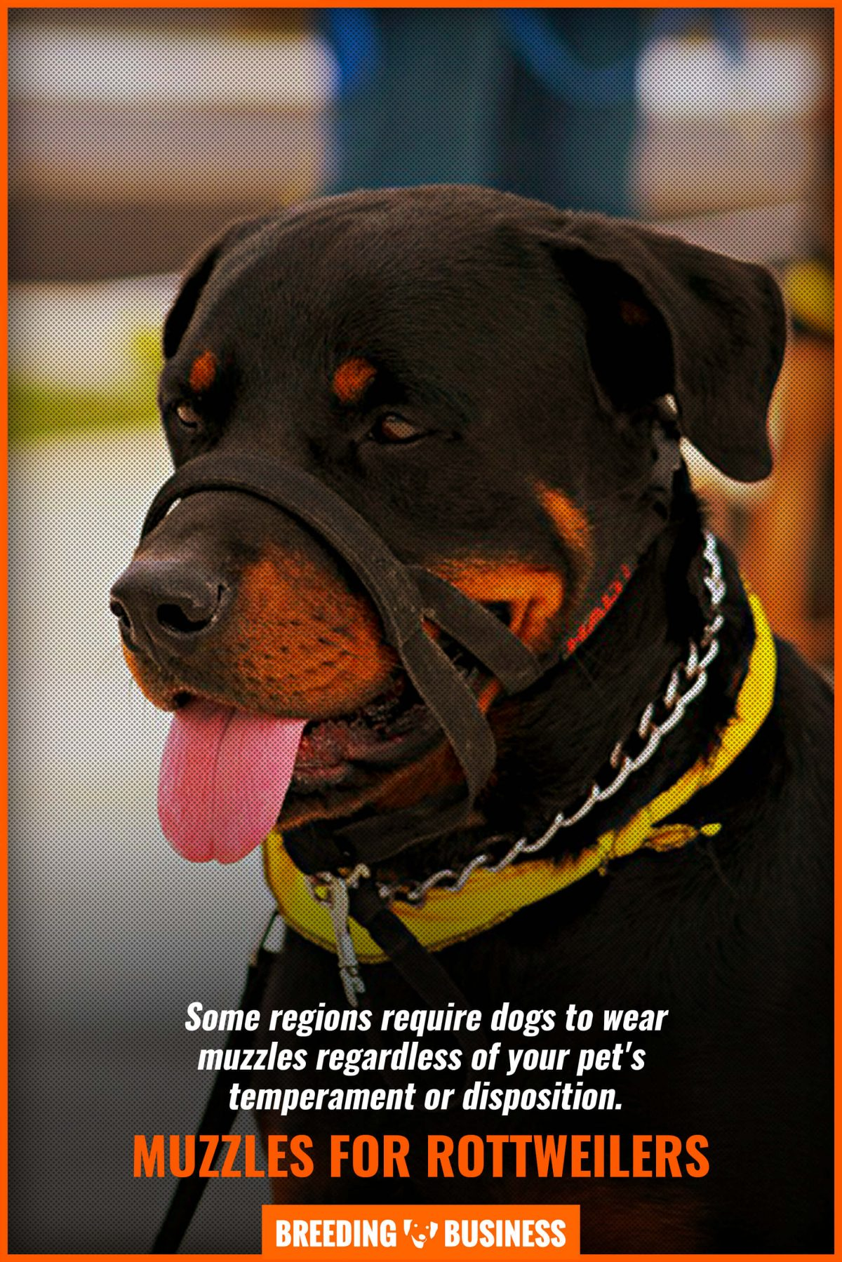 muzzles for rottweilers