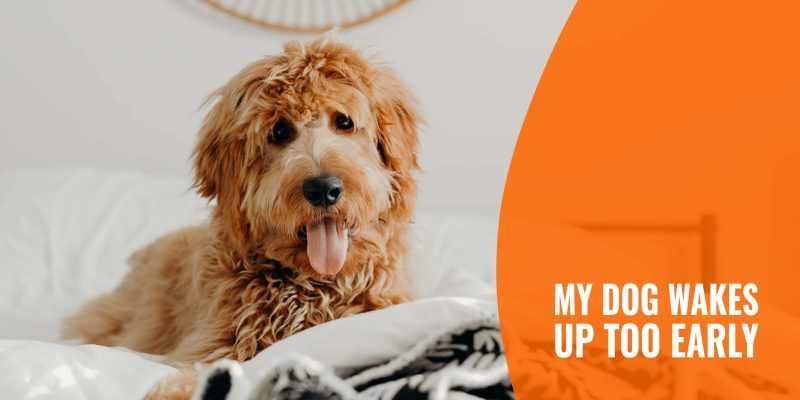 My Dog Wakes Up Too Early – 7 Tips to Change this Habit