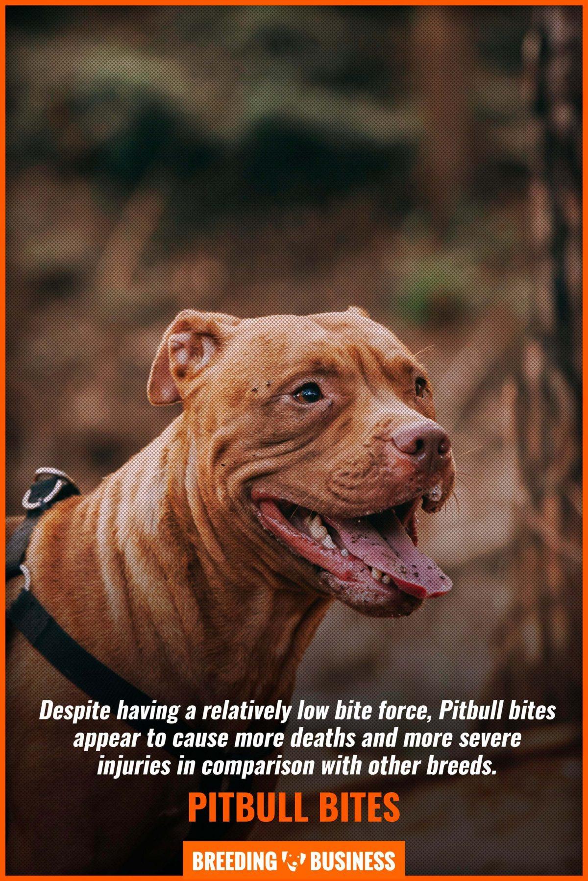 pitbull bites