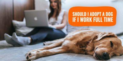 should i adopt a dog if i work full time