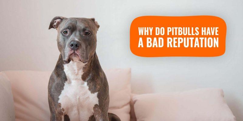 why do pitbulls have a bad reputation