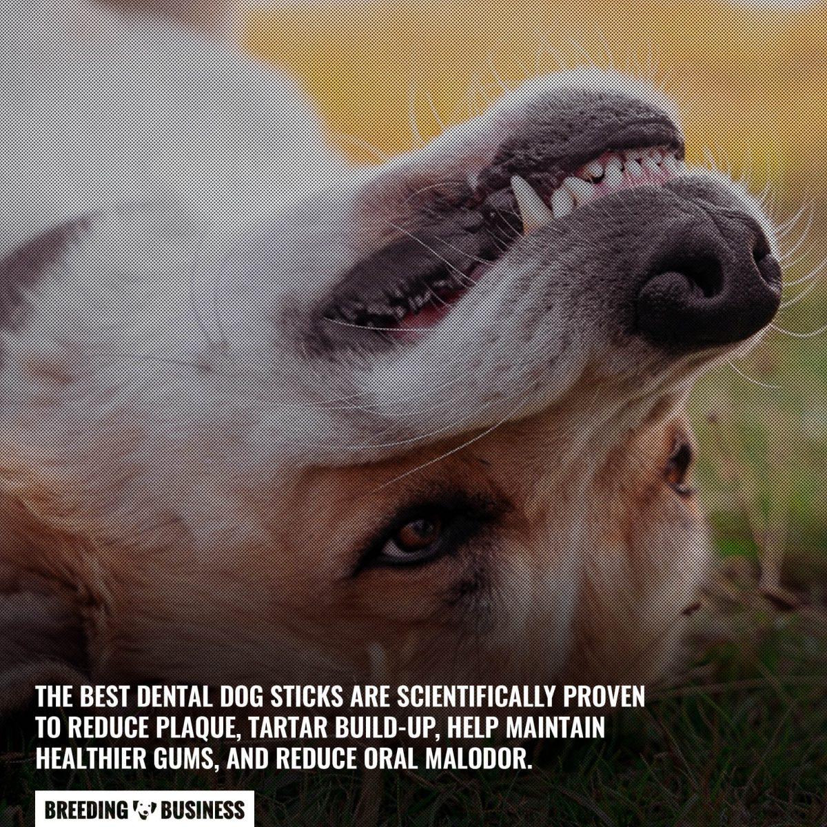 benefits of dog dental sticks